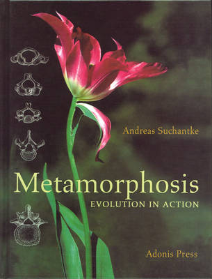 Image for <B>Metamorphosis </B><I> Evolution in Action</I>